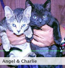 Angel & Charlie